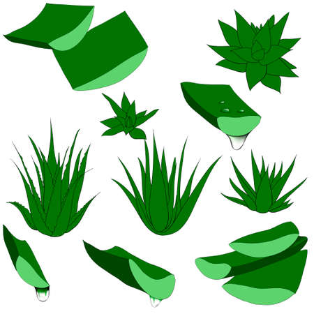 Set of aloe vera with cut pieces with fresh drops of water isolated illustration Фото со стока