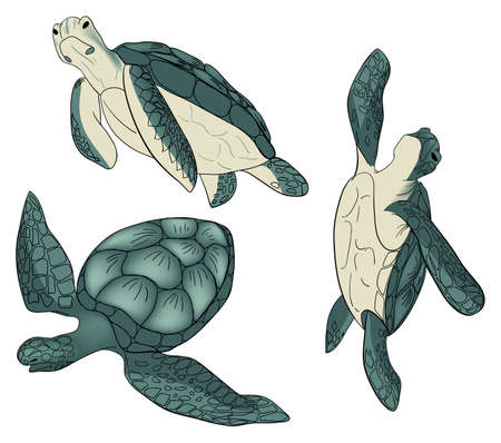 Vector set of color sea turtle isolated white background Illustration