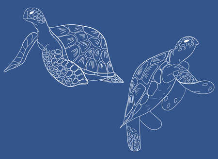 Line ector set of sea turtle isolated blue background