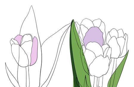 Vector lineart tulip. Spring illustration isolated white background Ilustração