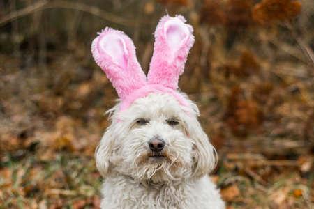 Grumpy dog bunny ears