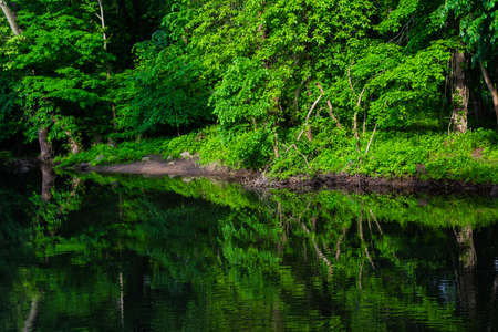 Lush green forest river reflection