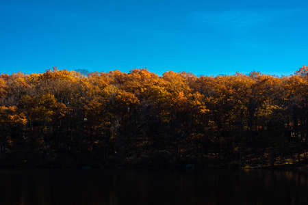 Fall color treeline in Harriman State Park