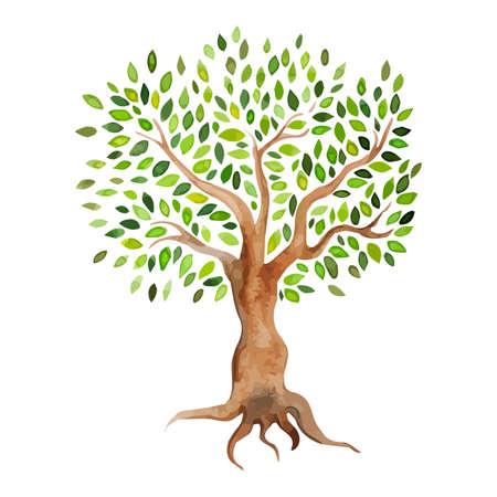 Arbre vecteur aquarelle isolé sur fond blanc. Aquarelle sur papier d'arbre de l'été stylisée. Eco-conception. Banque d'images - 36931464