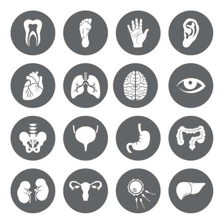 플랫 스타일에서 인간의 장기와 벡터 의료 아이콘의 집합입니다. 검은 기준으로 의료 흰색 아이콘. 웹 및 모바일 애플리케이션을위한 인체 해부학 평