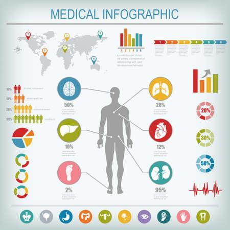 higado humano: Infografía médica elementos. Cuerpo humano con los órganos internos. Ilustración del vector.