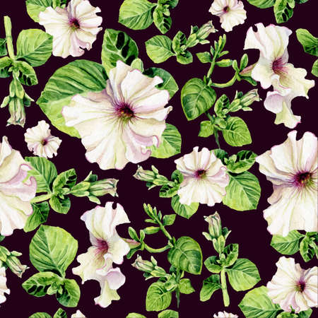 petunia: Vector seamless background with watercolors petunia on dark background. Lovely realistic garden flowers. Perfect for manufacture wrapping paper, textile, web design. Illustration