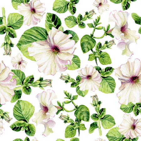 petunia: Vector seamless background with watercolors petunia on white background. Lovely realistic garden flowers. Perfect for manufacture wrapping paper, textile, web design. Illustration