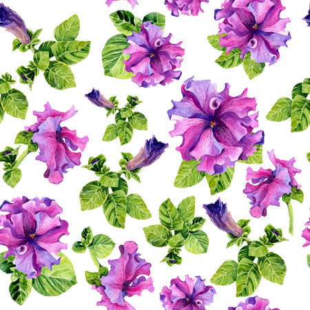 petunia: Vector seamless background with watercolors lilac petunia on white background. Lovely realistic garden flowers. Perfect for manufacture wrapping paper, textile, web design.