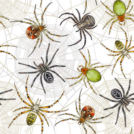 Halloween seamless pattern with spiders on web. Vector background