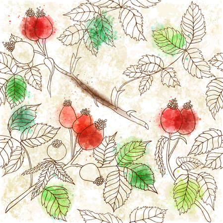 wild rose: Seamless pattern with branches of wild rose. Hand drawn graphics of branches, leaves and hips berries. Perfect for greetings, invitations, manufacture wrapping paper, textile, web design.