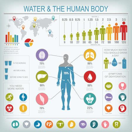 Woda i ludzka infografika ciała. Przydatne informacje na temat wody. Koncepcja zdrowego stylu życia. Pij więcej wody. Ilustracje wektorowe