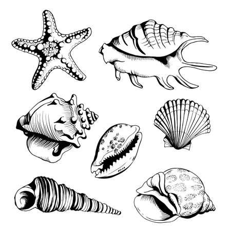 Vector conjunto con dibujado a mano seashells y estrellas de mar. Aislados en fondo blanco. Ilustración de la vendimia del vintage para usted diseño y scrapbooking.