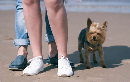 female and male legs in sports shoes on the beach, next to a Yorkshire terrier.