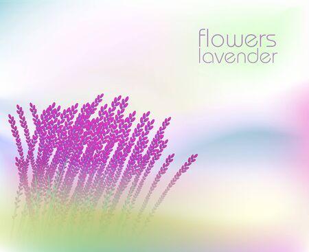 Background with flower lavender field Illustration