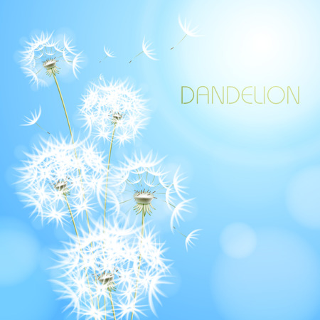 rounds: Blue light background with flower dandelion.