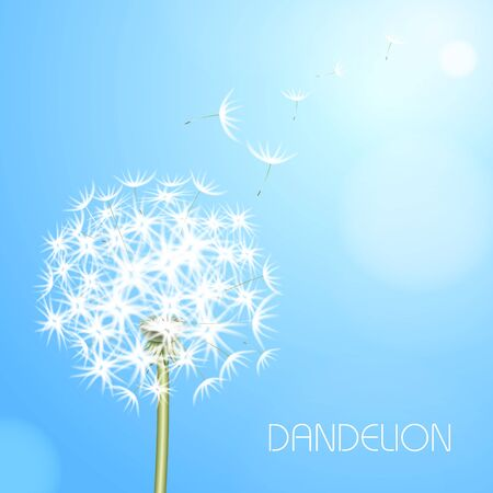 rounds: Blue light background with flower dandelion