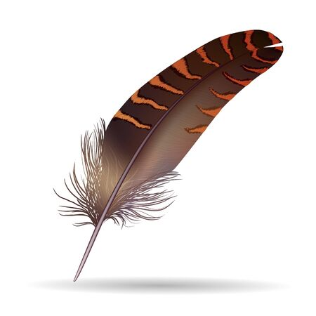 Realistic feather Illustration