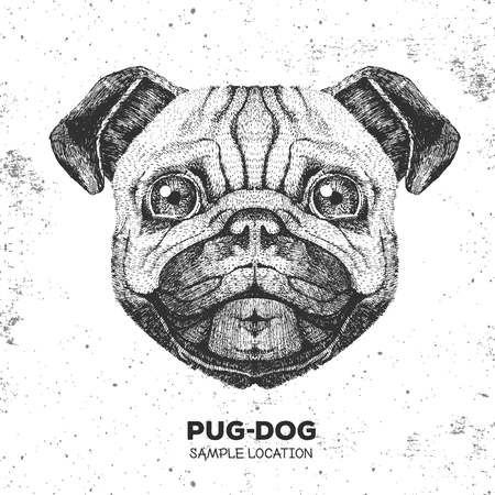 Retro Hipster animal pug-dog. Hand drawing Muzzle of pug-dog. Stock Illustratie