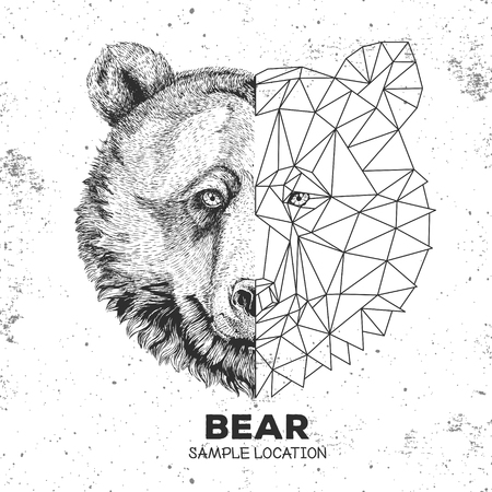 Hipster animal realistic and polygonal bear face. Triangle animal