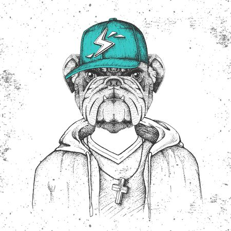 Hipster animal bulldog dressed in cap like rapper. Hand drawing Muzzle of bulldog