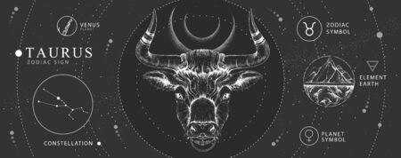 Modern magic witchcraft card with astrology Taurus zodiac sign. Realistic hand drawing bull head. Zodiac characteristic Illustration