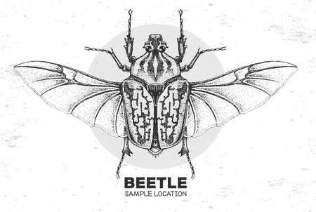 Realistic hand drawing Goliath beetle. Artistic Bug. Entomological vector illustration