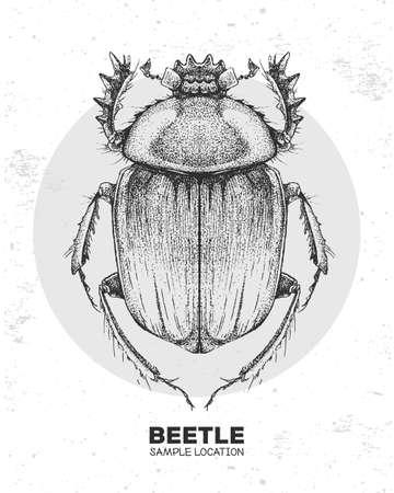 Realistic hand drawing Scarabaeus beetle. Artistic Bug. Entomological vector illustration