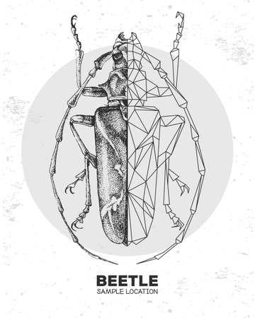 Realistic hand drawing and polygonal longhorn beetle. Artistic Bug. Entomological vector illustration