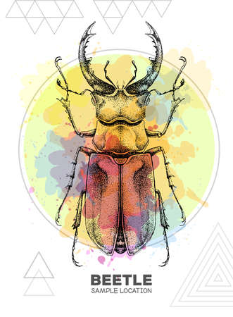 Realistic hand drawing stag beetle on watercolor background. Artistic Bug. Entomological vector illustration