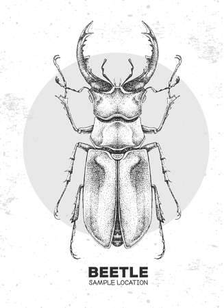 Realistic hand drawing stag beetle. Artistic Bug. Entomological vector illustration 矢量图像