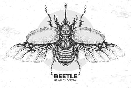 Realistic hand drawing rhinoceros beetle. Artistic Bug. Entomological vector illustration