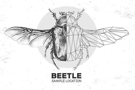 Realistic hand drawing and polygonal Flower chafer beetle. Artistic Bug. Entomological vector illustration 矢量图像