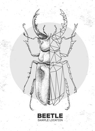 Realistic hand drawing and polygonal stag beetle. Artistic Bug. Entomological vector illustration