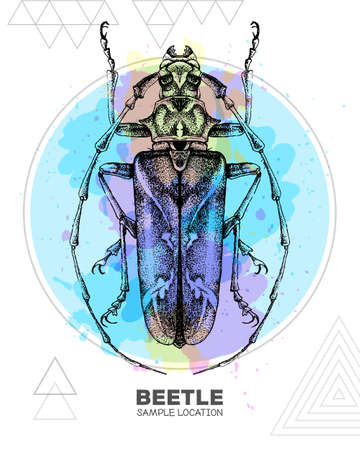 Realistic hand drawing longhorn beetle on watercolor background. Artistic Bug. Entomological vector illustration