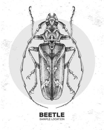 Realistic hand drawing longhorn beetle. Artistic Bug. Entomological vector illustration