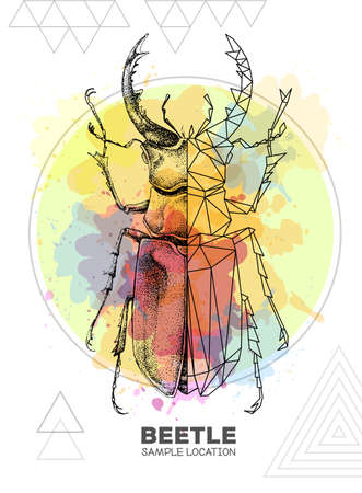 Realistic hand drawing and polygonal stag beetle on watercolor background. Artistic Bug. Entomological vector illustration
