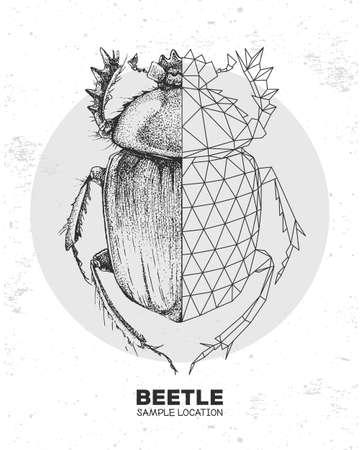 Realistic hand drawing and polygonal Scarabaeus beetle. Artistic Bug. Entomological vector illustration