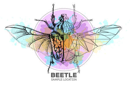 Realistic hand drawing and polygonal Goliath beetle on watercolor background. Artistic Bug. Entomological vector illustration