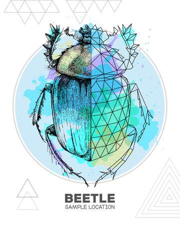 Realistic hand drawing and polygonal Scarabaeus beetle on watercolor background. Artistic Bug. Entomological vector illustration