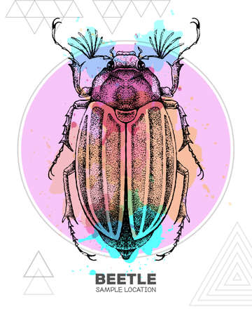 Realistic hand drawing beetle on watercolor background. Artistic Bug. Entomological vector illustration
