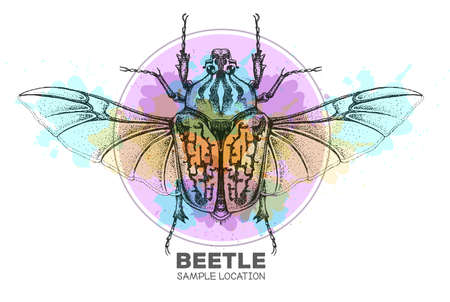 Realistic hand drawing Goliath beetle on watercolor background. Artistic Bug. Entomological vector illustration