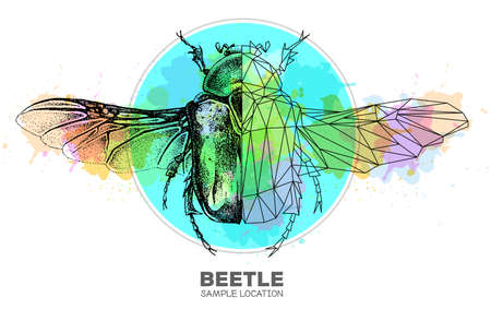 Realistic hand drawing and polygonal Flower chafer beetle on watercolor background. Artistic Bug. Entomological vector illustration 矢量图像