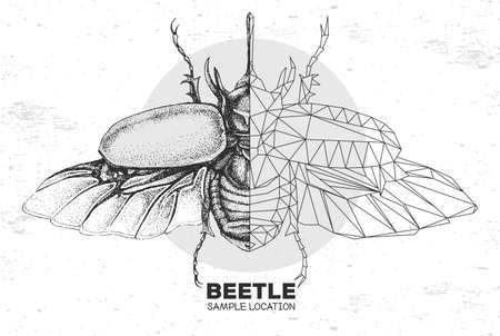 Realistic hand drawing and polygonal rhinoceros beetle. Artistic Bug. Entomological vector illustration