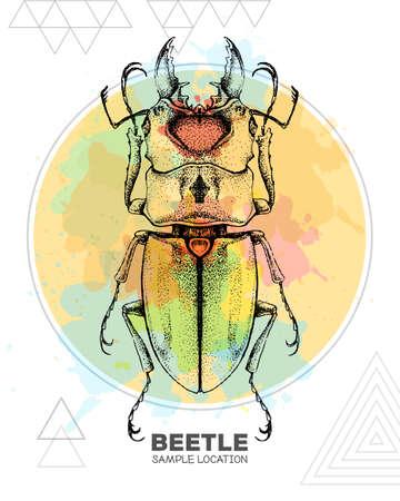 Realistic hand drawing beetle. Artistic Bug. Entomological vector illustration