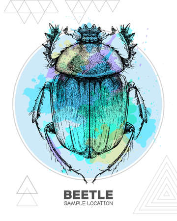 Realistic hand drawing Scarabaeus beetle on watercolor background. Artistic Bug. Entomological vector illustration