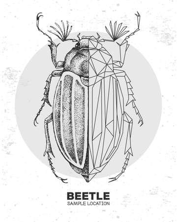 Realistic hand drawing and polygonal beetle. Artistic Bug. Entomological vector illustration 矢量图像
