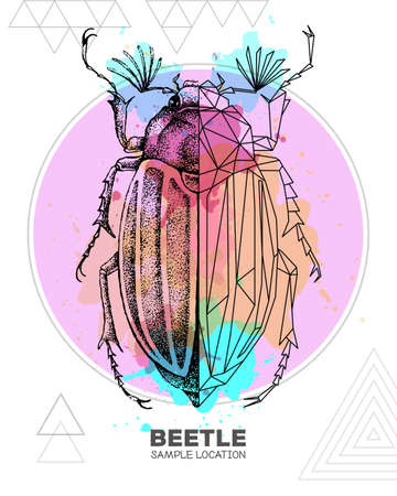 Realistic hand drawing and polygonal beetle on watercolor background. Artistic Bug. Entomological vector illustration