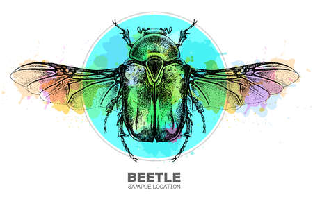 Realistic hand drawing Flower chafer beetle on watercolor background. Artistic Bug. Entomological vector illustration
