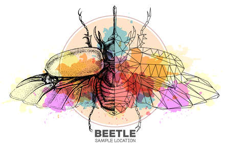 Realistic hand drawing and polygonal rhinoceros beetle on watercolor background. Artistic Bug. Entomological vector illustration 矢量图像